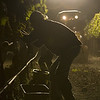 """Lights on a tractor create a surreal scene as a vineyard worker harvests Chardonnay in the cool of the night. <br>Photo by <a href=""""http://www.tinacciphoto.com"""" target=""""_blank"""">Jason Tinacci</a> / Napa Valley Vintners"""