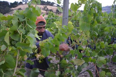 Harvest Napa Valley